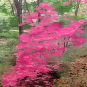 Azalea in Central park NY, 90 cm x 95 cm